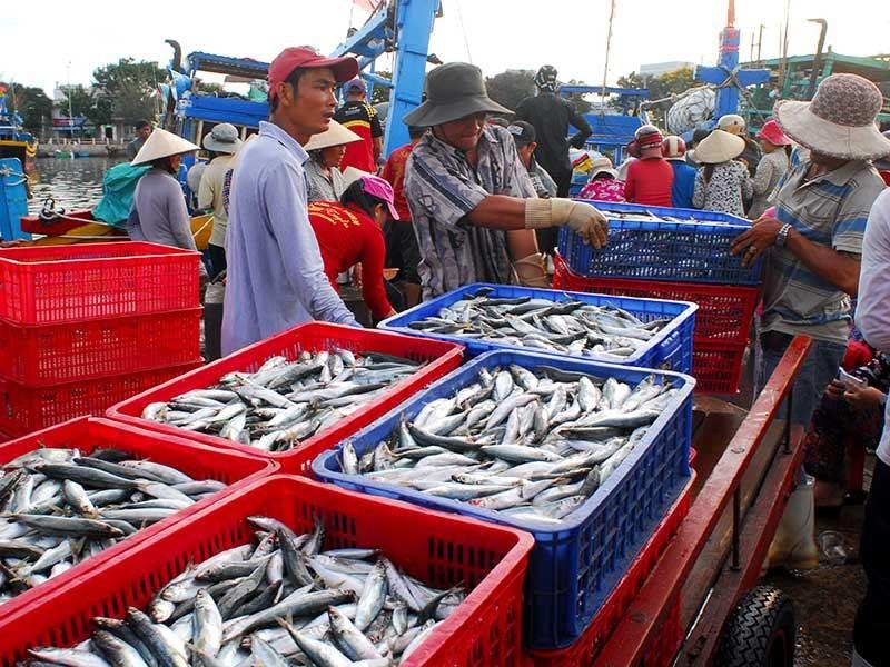 Cảnh báo nguy cơ hải sản Việt Nam bị EU phạt thẻ đỏ  - ảnh 2