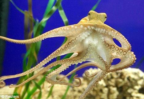 Xuất khẩu mực, bạch tuộc sang Nhật Bản giảm 4%
