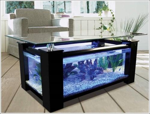 Thiết kế nội thất đẹp bằng bể cá thủy sinh