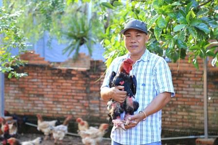 Bỏ túi trăm triệu mỗi tháng nhờ gà Đông Tảo