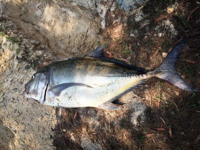 Loại trừ nguyên nhân cá ở miền Trung chết do tác động tự nhiên