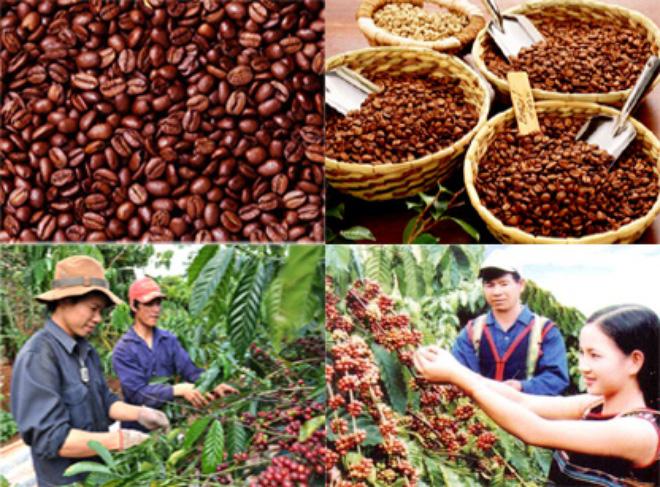Bán hay trữ hàng - Bài toán khó của người trồng cà phê Tây Nguyên