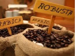 Giá cà phê trong nước giảm 1 triệu đồng/tấn trong 2 ngày
