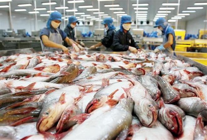 Cá tra Việt chuyển dần sang thị trường châu Á