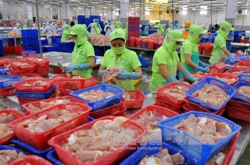 Cá tra 'mắc cạn' ở thị trường Hoa Kỳ