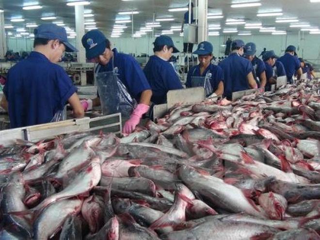 Có lần thứ ba may mắn cho cá tra Việt Nam?