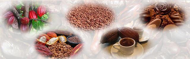 Người bán socola cho Starbucks, Lotte và chiến lược đường vòng đưa thanh socola Made in Vietnam đi khắp thế giới - Ảnh 2.