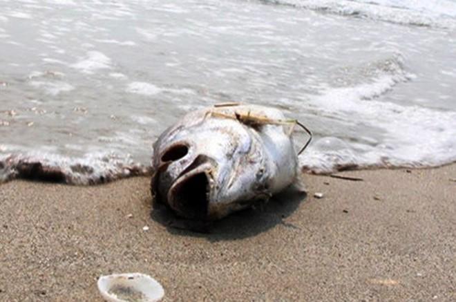 Thủy triều đỏ và độc tố gây cá chết như thế nào?