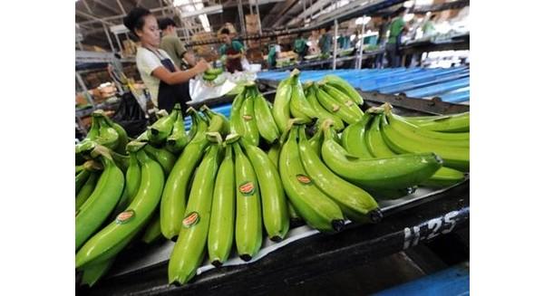 Cảnh báo doanh nghiệp Việt bị lừa tiền khi xuất khẩu trái cây sang UAE