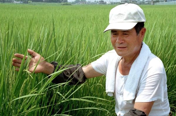 Nhật tăng xuất gạo, Việt Nam có lo ngại?