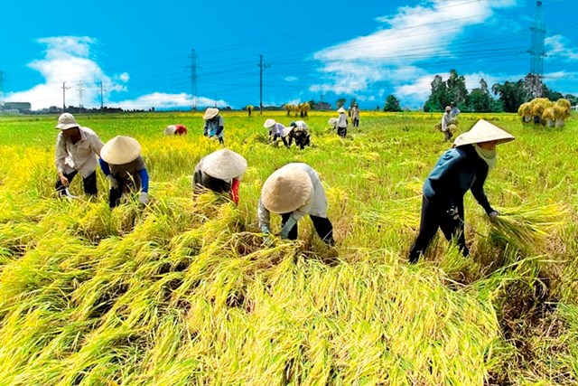 """Khoa học công nghệ: """"Chìa khóa vàng"""" của ngành nông nghiệp"""