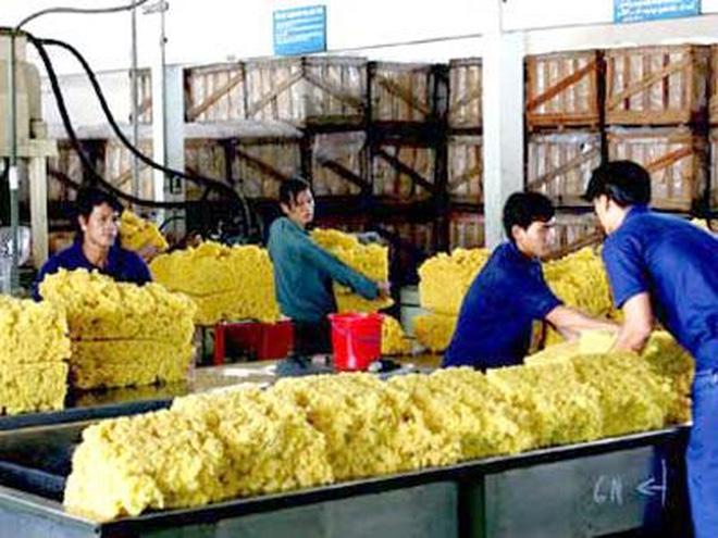 Xuất khẩu cao su sang các thị trường chủ lực duy trì tăng trưởng
