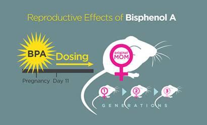 Chất hóa học BPA trong giấy in hóa đơn làm giảm khả năng sinh sản
