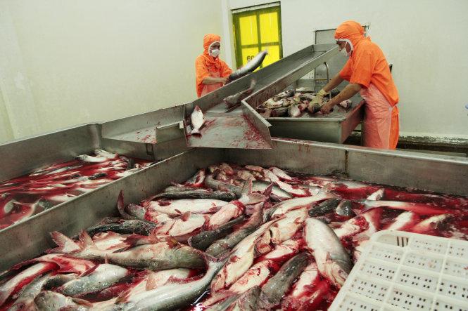 Farm Bill có hiệu lực, cửa cá tra vào Mỹ thêm hẹp