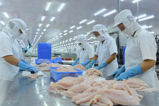 Trung Quốc mua cá tra Việt Nam xuất đi Mỹ?
