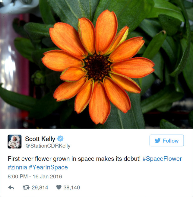Chiêm ngưỡng bông hoa đầu tiên nở... ngoài vũ trụ