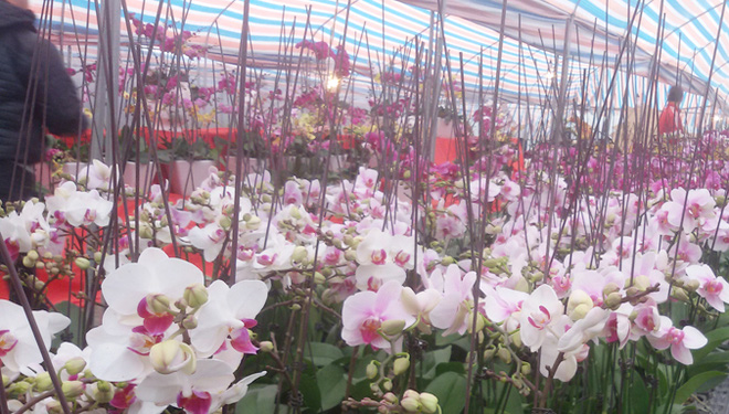 Làm sao thực hiện giấc mơ 'cường quốc hoa'?