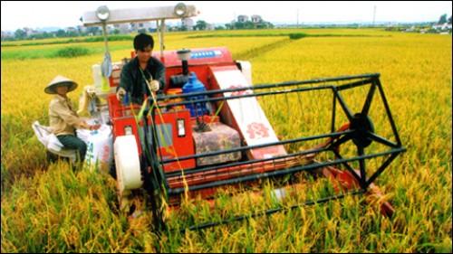 Nông nghiệp Việt từ góc nhìn khác