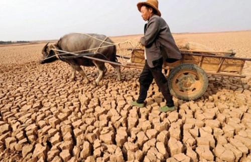 El Nino có nhấn chìm cổ phiếu ngành phân bón?