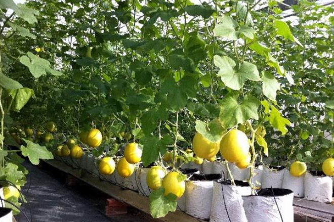 Khó tiếp cận đầu tư công trong nông nghiệp
