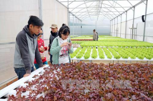Hàng ngàn doanh nghiệp nông nghiệp đang 'đói' vốn