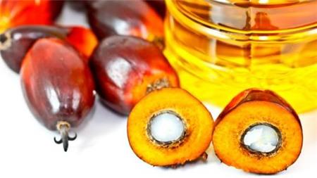 Dự trữ dầu cọ tại Malaysia tăng do nhu cầu suy yếu