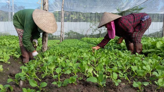Sản xuất nông, lâm nghiệp và thủy sản 10 tháng đầu năm 2017