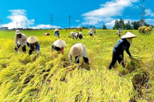 Cục quản lý giá: Giá gạo có xu hướng tiếp tục tăng trong thời gian tới