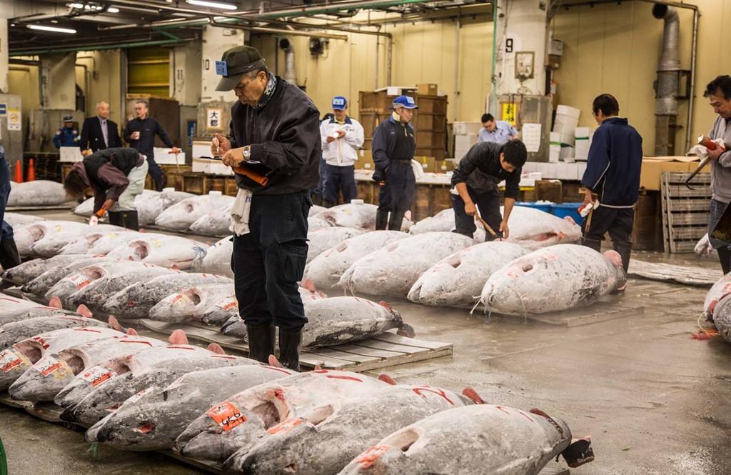 xem ban dau gia ca ngu o cho tsukiji:tsukiji la mot trong nhung cho ca lon nhat the gioi, hop tu sang som va la noi cung cap nguyen lieu cho cac nha hang tokyo. chi khoang 120 nguoi duoc vao xem dau gia ca ngu, loai hai san dat gia duoc nguoi dan yeu thich. ngoai ra, ban co the ghe tham cac quay hang va thuong thuc nhieu mon ngon quanh cho. anh:irinakalashnikova.