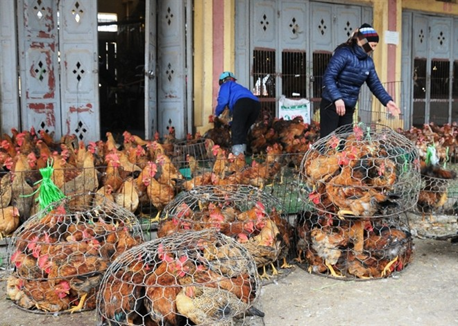 Lo gà thải, thịt 'rác'… Trung Quốc tràn vào Việt Nam