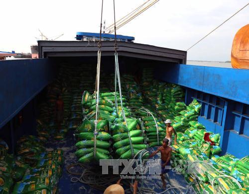 Gạo Việt mất dần thị trường xuất khẩu