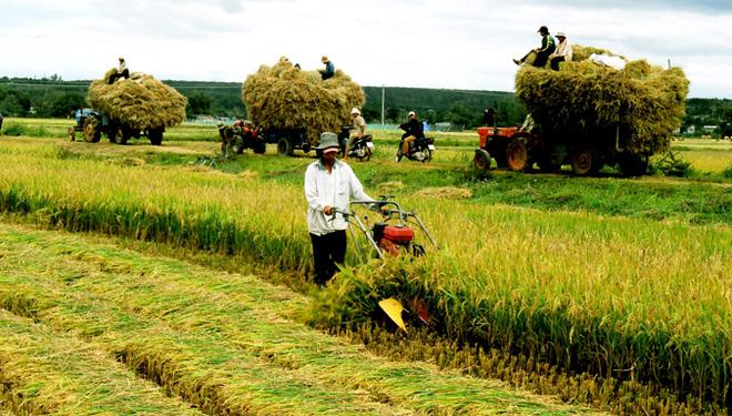 Nông nghiệp Việt chủ động trong sân chơi hội nhập