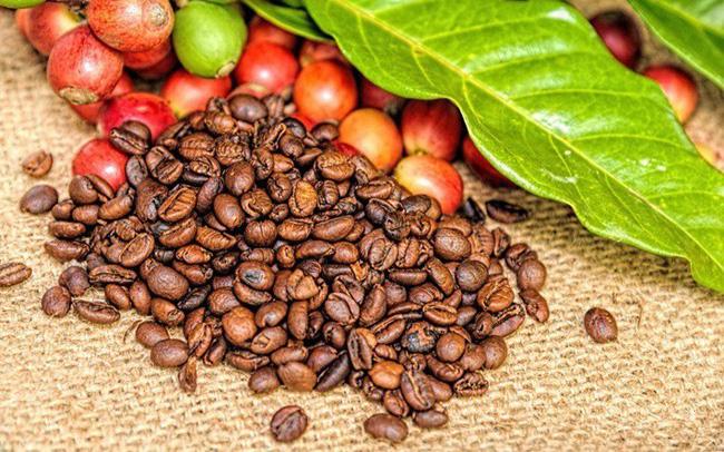 Đầu năm 2019, giá cà phê trong nước tăng cùng thế giới