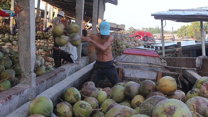 nang suat giam 60% va thuong lai canh tranh thu mua da day gia dua kho tang ky luc anh: phuong nam