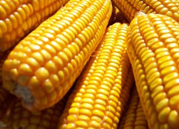 Video: Việt Nam xuất khẩu 4 triệu tấn gạo, nhập 5 triệu tấn bắp
