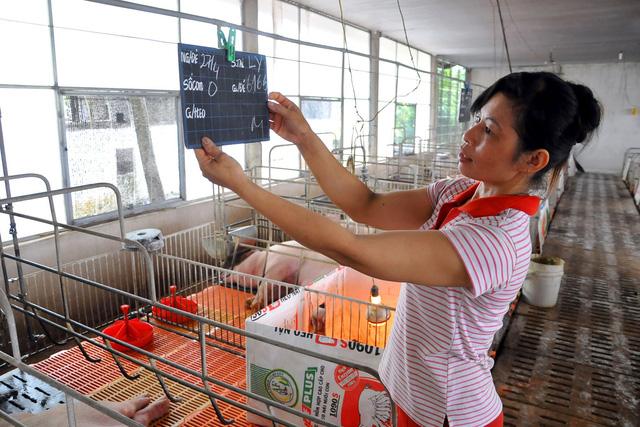 Đại chiến Mỹ - Trung: Thịt heo Mỹ sẽ tràn vào Việt Nam?