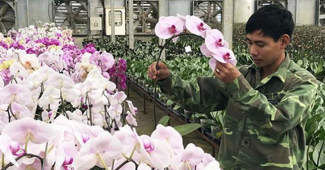 Xuất khẩu hoa Đà Lạt: 'Tắc' vì giống bản quyền
