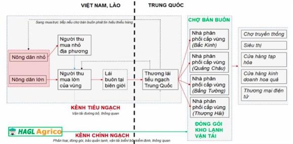 Hoang Anh Gia Lai: Lay ngan nuoi dai