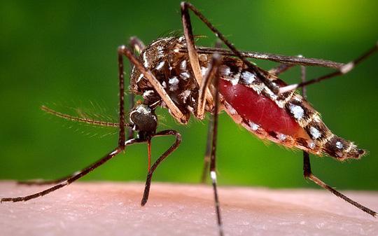 nhieu nuoc khuyen cao phu nu hoan mang thai vi virus zika do muoi truyen qua. anh: ap