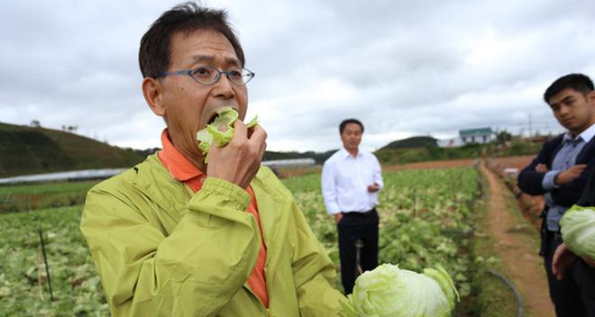 "kinh doanh nong san sach: nhat ban xa lach 1,2 trieu dong/kg, con viet nam van dang ""len vu tru bang dep lop"""
