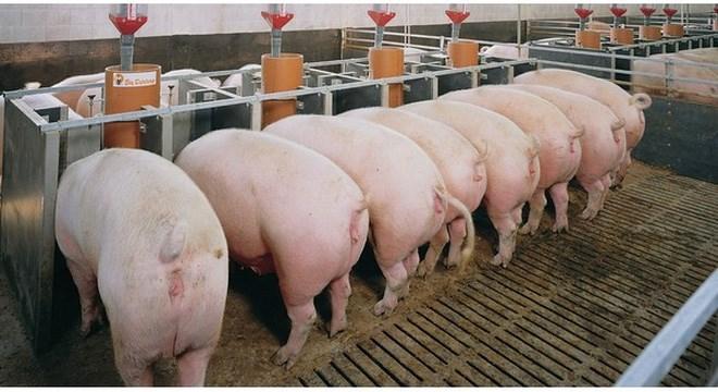 """Trung Quốc """"thèm"""" thịt lợn, Mỹ hồ hởi đẩy mạnh xuất khẩu"""