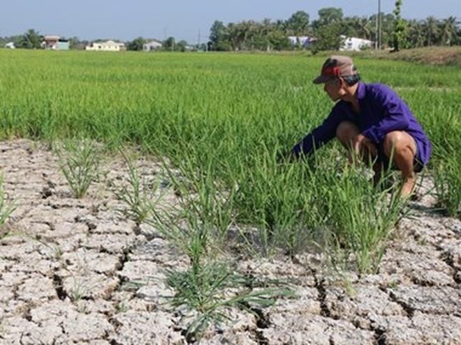 Đông Nam Á lo mất gạo vì El Nino