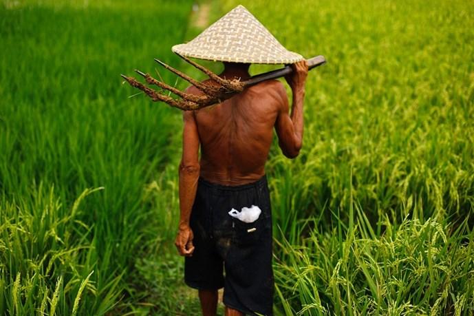 Bước tiến công nghệ trong ngành sản xuất lúa gạo