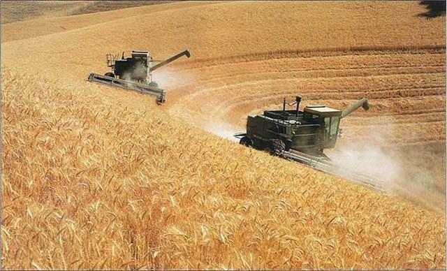 Cuộc chiến lúa mì: Mỹ yếu thế, Nga ngày càng mạnh mẽ