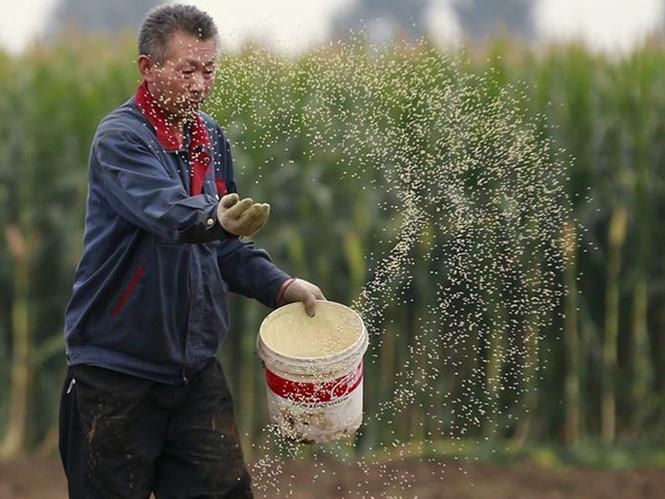 Tại sao Trung Quốc muốn kiểm soát nguồn lương thực toàn cầu?