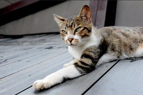 Thiên đường dành cho mèo ở Đài Loan