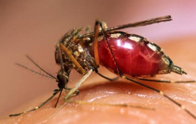 Muỗi lấy bao nhiêu tỷ USD của nền kinh tế?