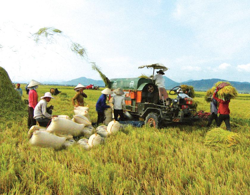 Cơ cấu lại ngành nông nghiệp: Đến 2020, tỷ trọng lao động nông nghiệp giảm xuống dưới 40%