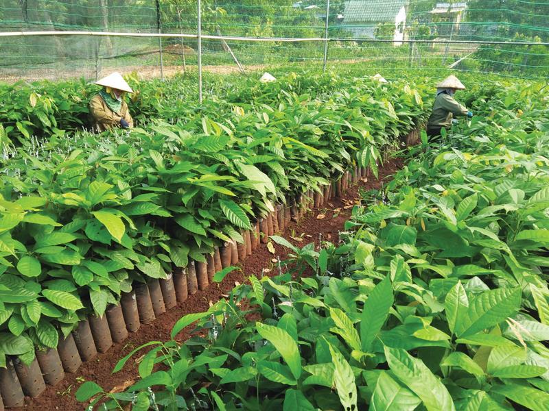 Nhật Bản hối hả đổ vốn vào nông nghiệp Việt Nam