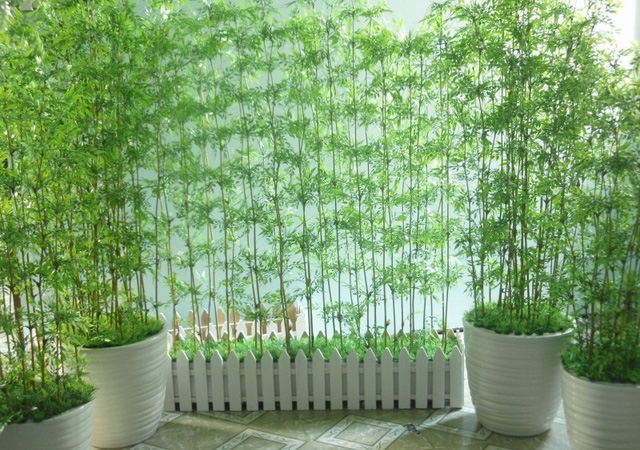 """Những cây cảnh phải trồng trong nhà để """"tiền vào như nước"""""""